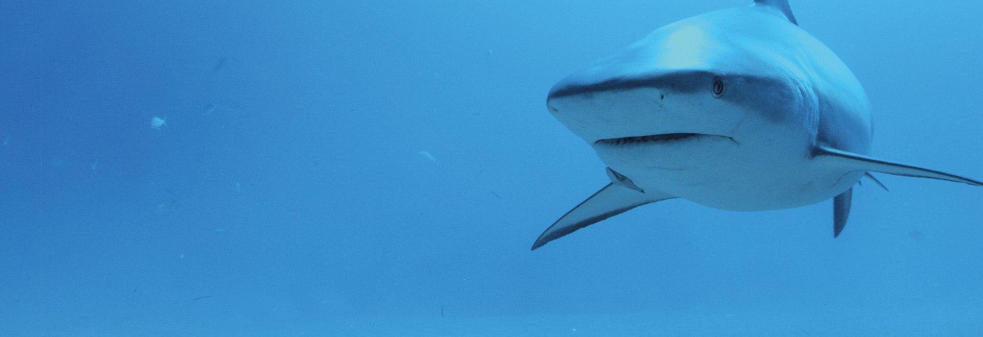 Lo squadrone degli squali