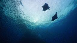 Isole del Pacifico: scompiglio nell'oceano