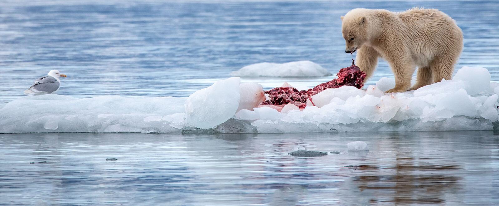 La storia tra i ghiacci: il viaggio..