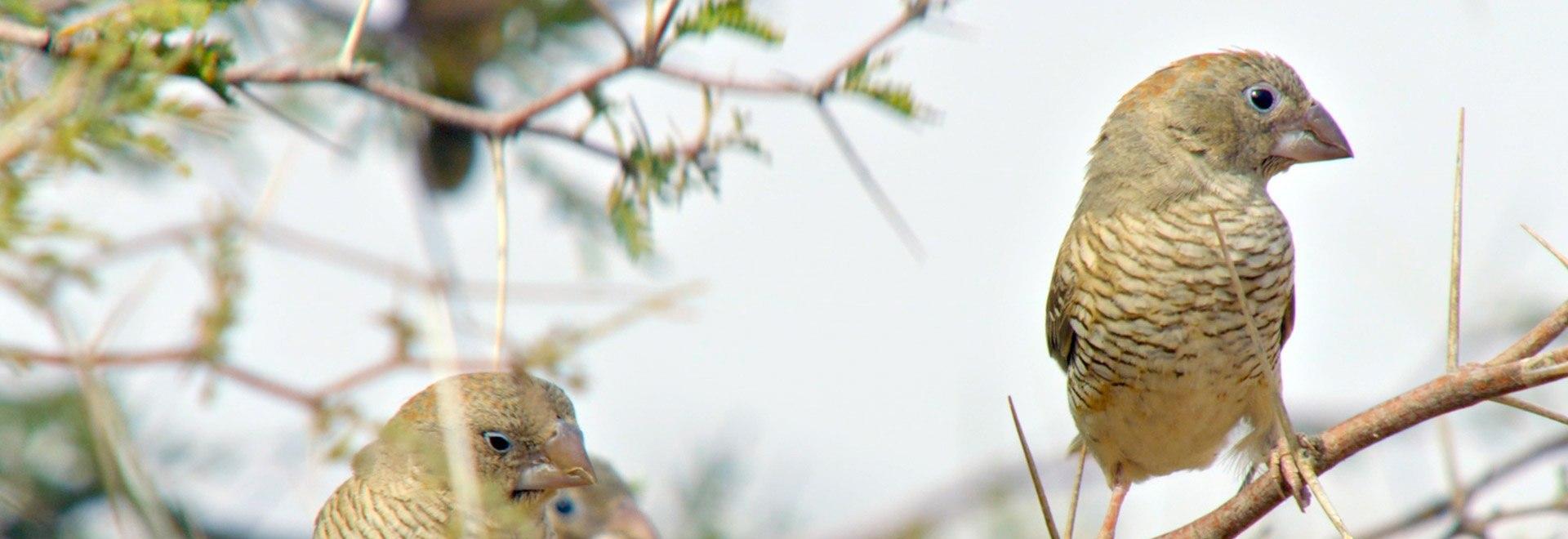 Il Parco Nazionale Chobe: terra maestra