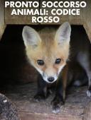 Pronto soccorso animali: codice rosso