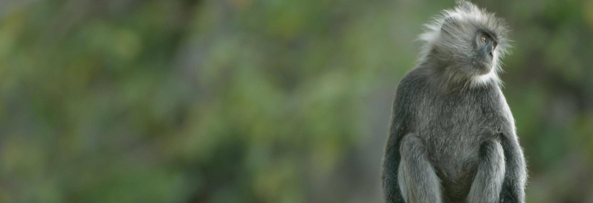 Laos: Montagne selvagge