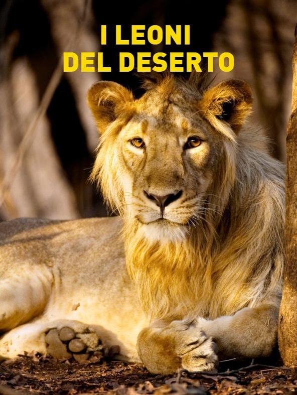 I leoni del deserto