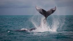 La costa dei delfini