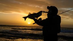 Pesca al salmone. 1a parte