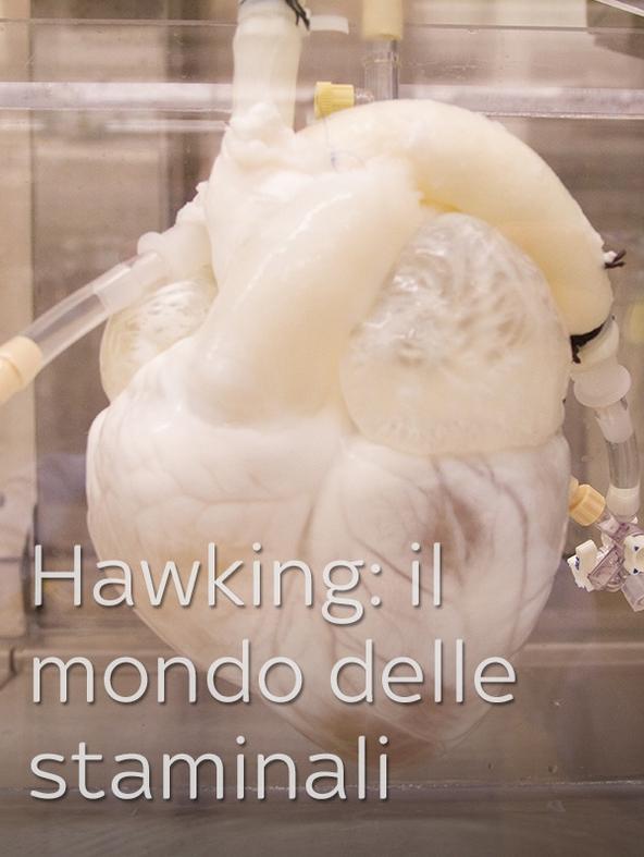 Hawking: il mondo delle staminali