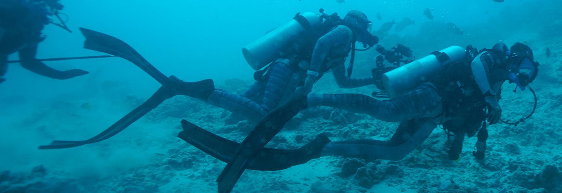 Alla ricerca dello squalo perduto