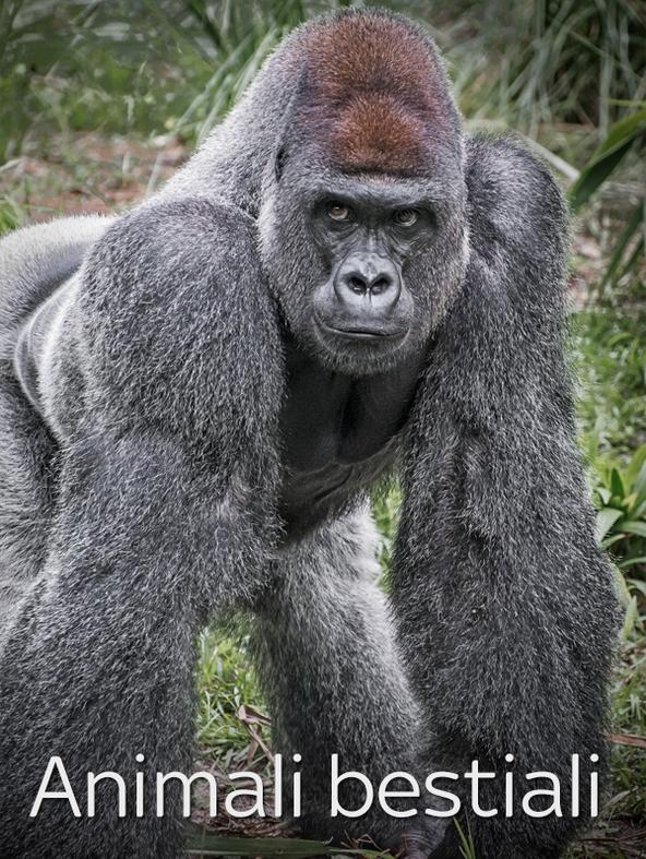 S3 Ep4 - Animali bestiali