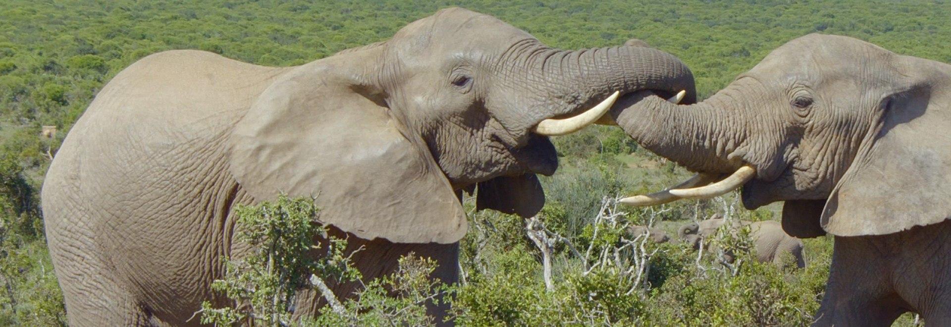 Storie di elefanti