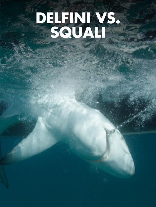 Squalomania: Delfini vs. squali -  - 1^TV