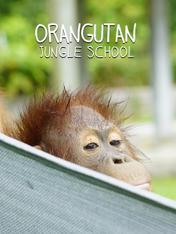 S1 Ep9 - Orangutan Jungle School