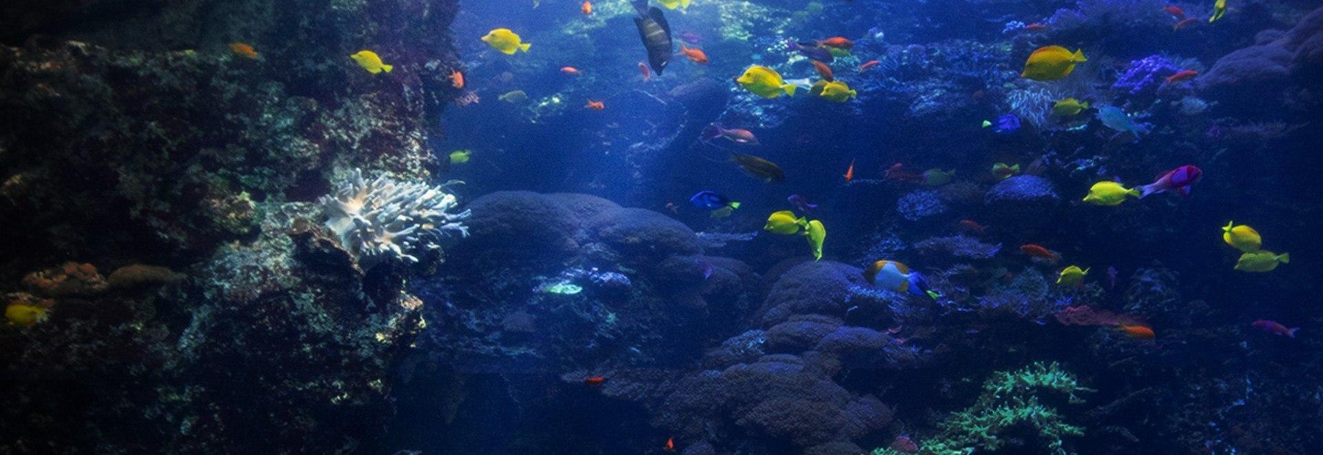 SOS Barriera corallina