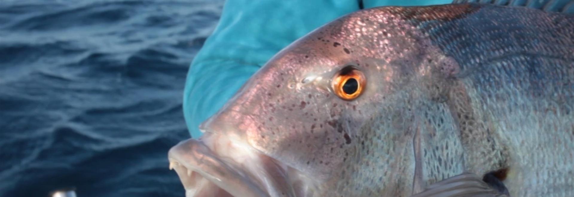 A pesca con Bass Zone