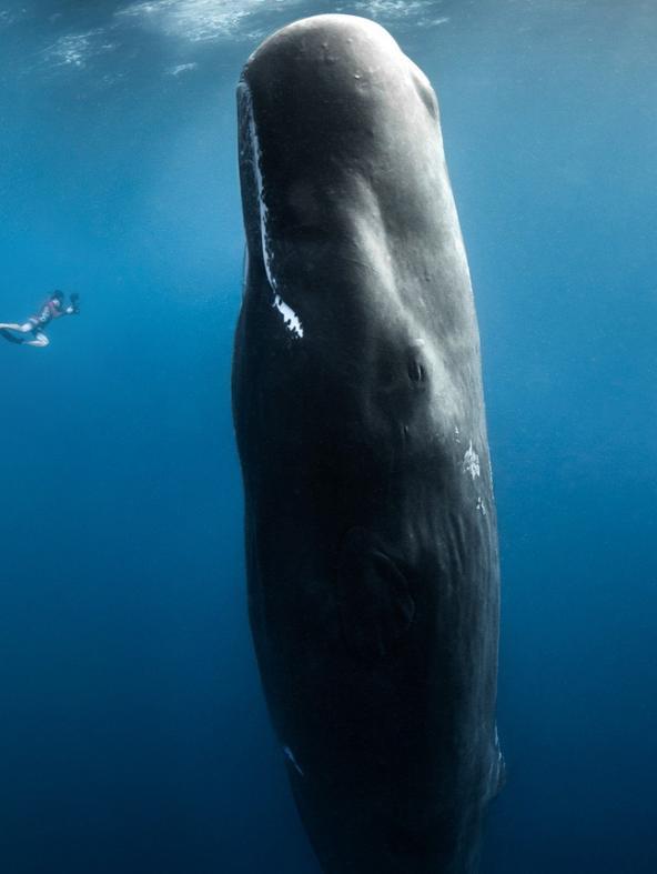 I giganti degli oceani - 1^TV