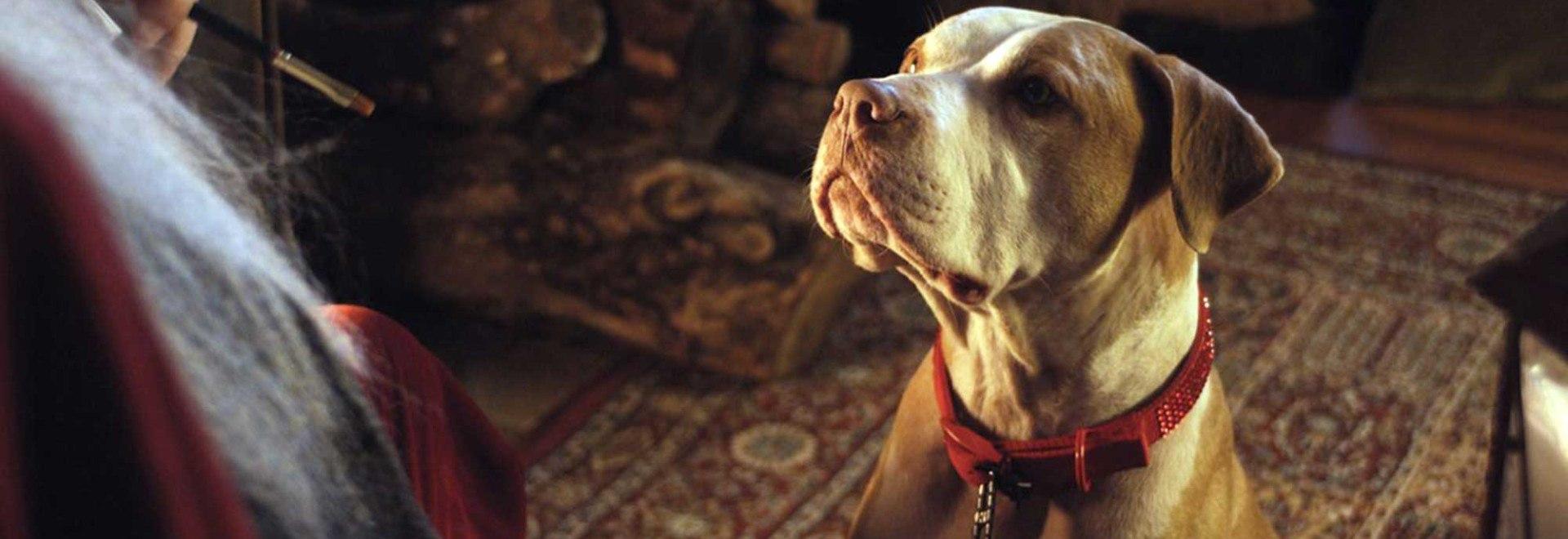 Hercules - Il cane di Babbo Natale