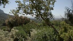 Giardino Botanico Kirstenbosch