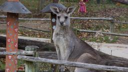 Un Koala da salvare