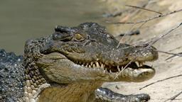 La vita segreta dei coccodrilli