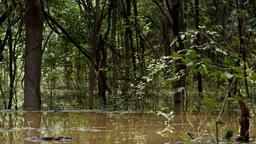 Amazzonia: i segreti della Foresta