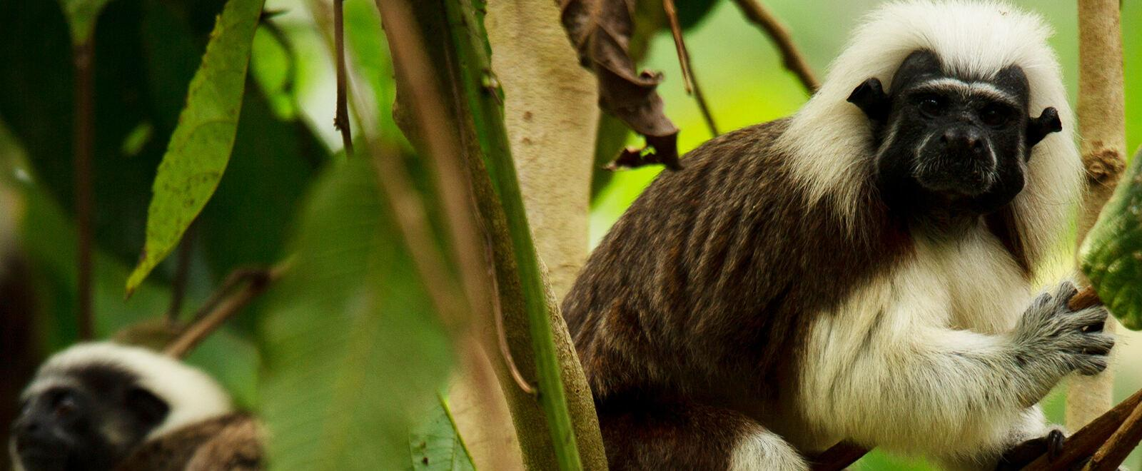 Into the wild: Colombia