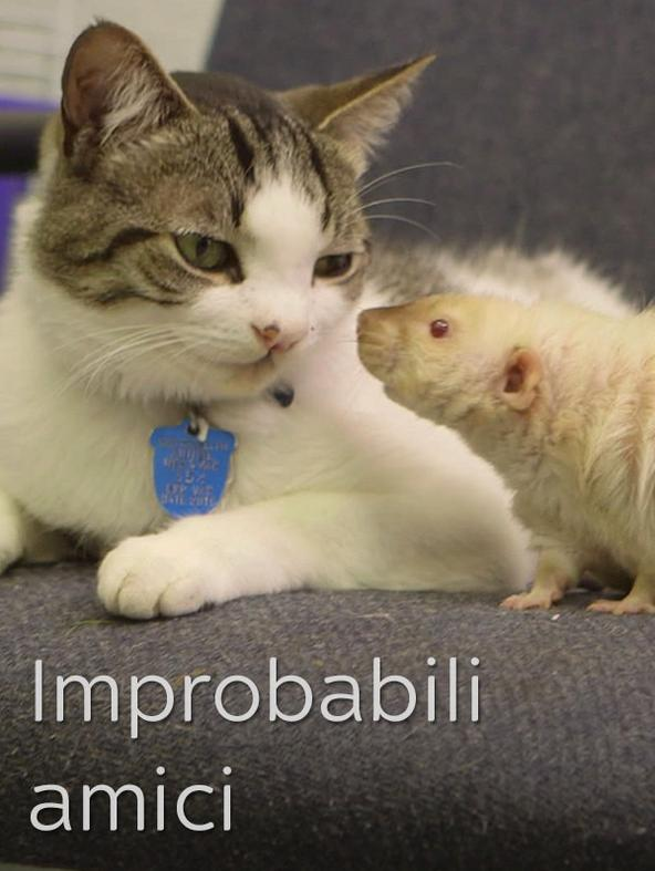 Improbabili amici