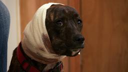 La clinica dei cani