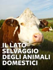 S1 Ep2 - Il lato selvaggio degli animali...