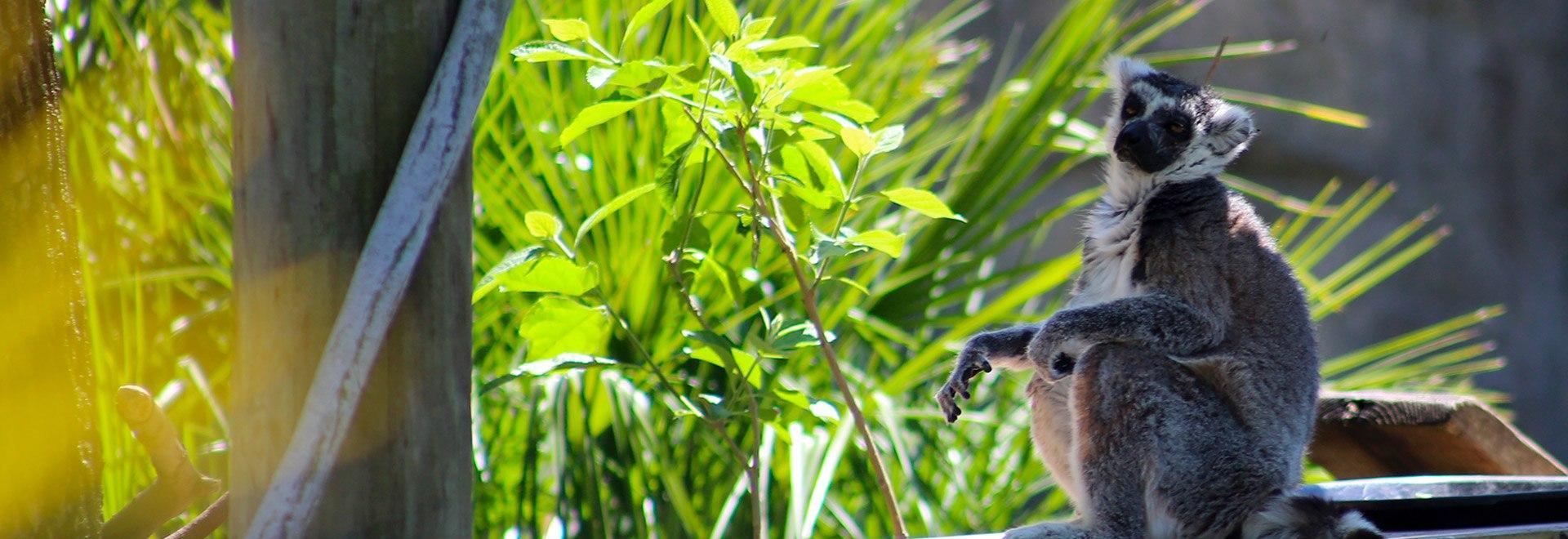 L'oasi degli animali: Florida