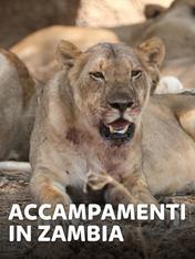 S1 Ep5 - Accampamenti in Zambia
