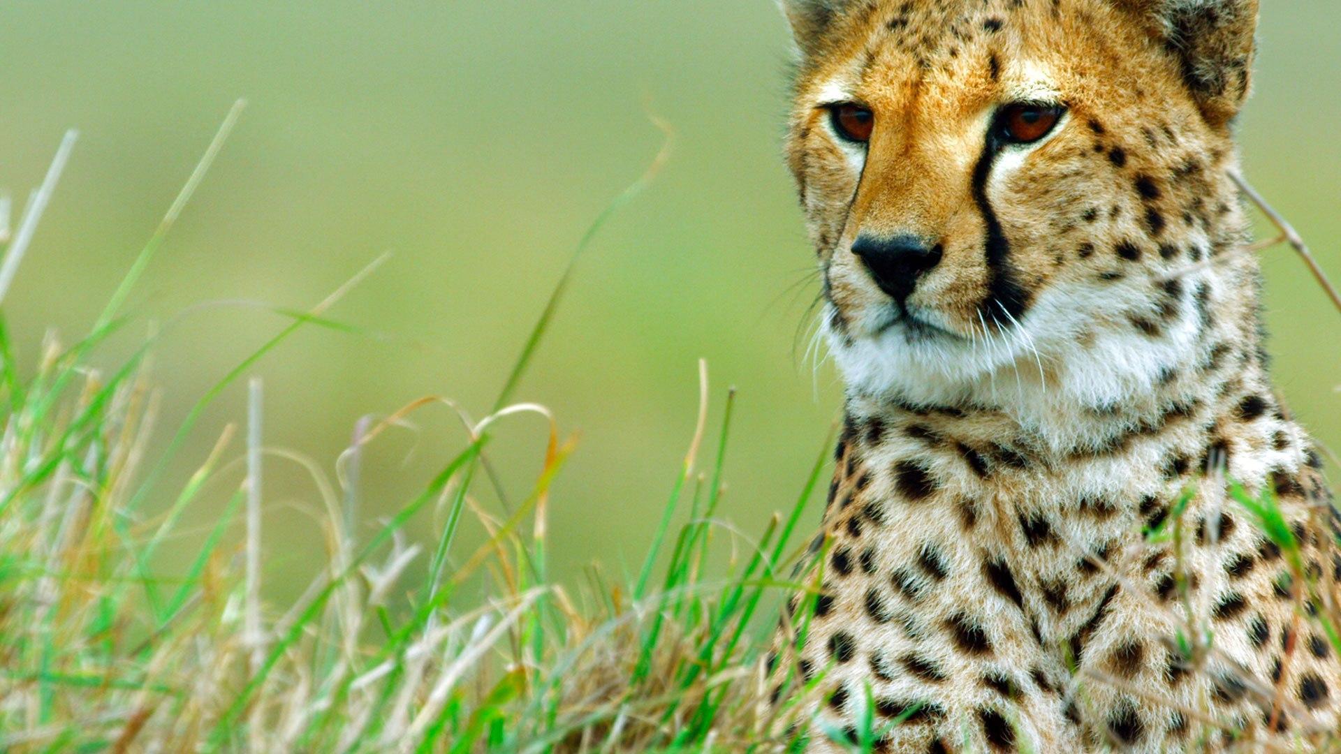 NatGeo Wild HD I grandi cacciatori della natura