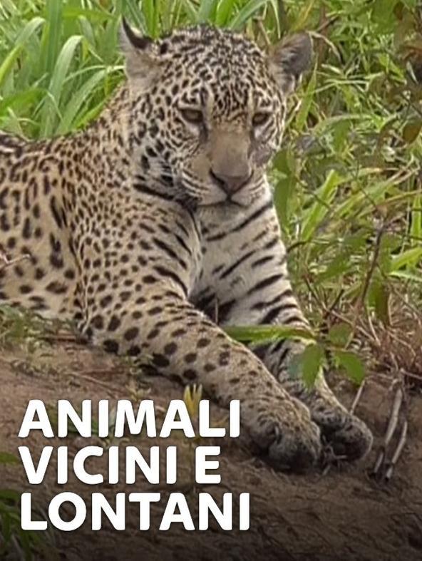 Animali vicini e lontani