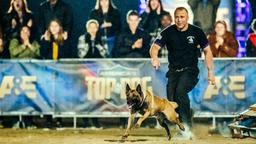 Cane da salotto o cane poliziotto?