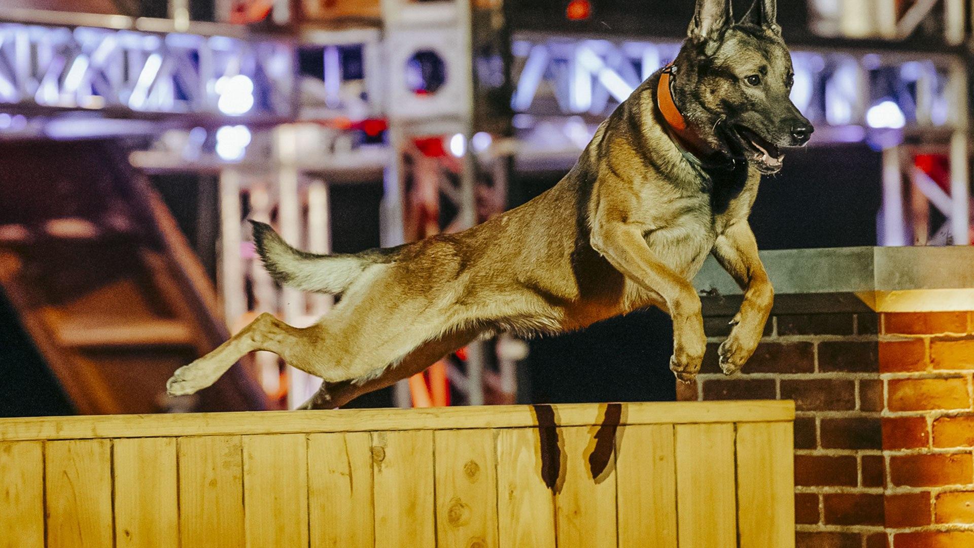 Blaze HD Top Dog: Olimpiadi a 4 zampe