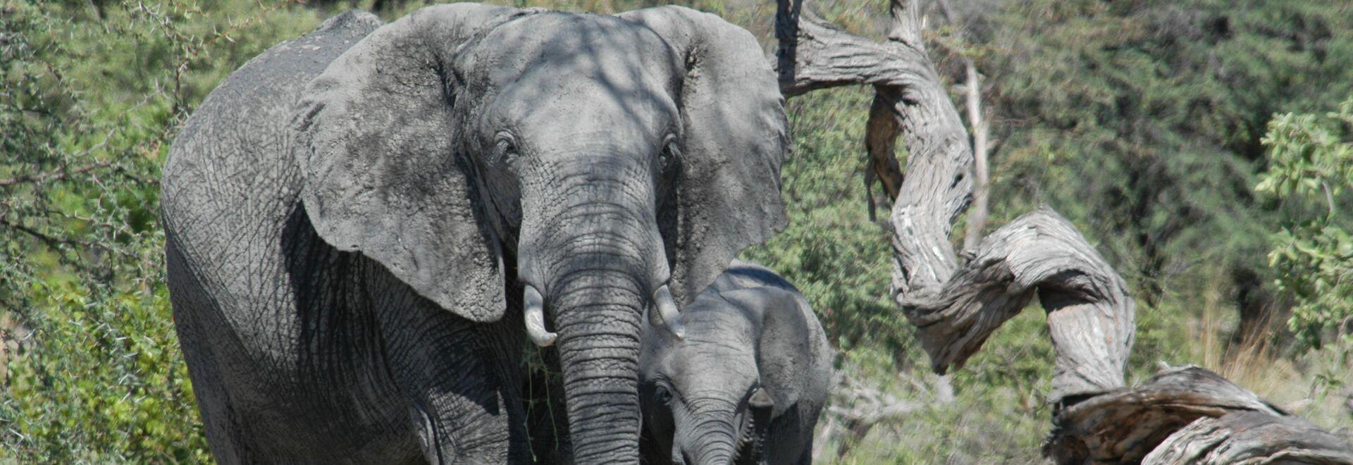La furia dell'elefante