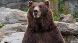 L'orso polare
