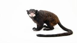 Per il bene dei primati