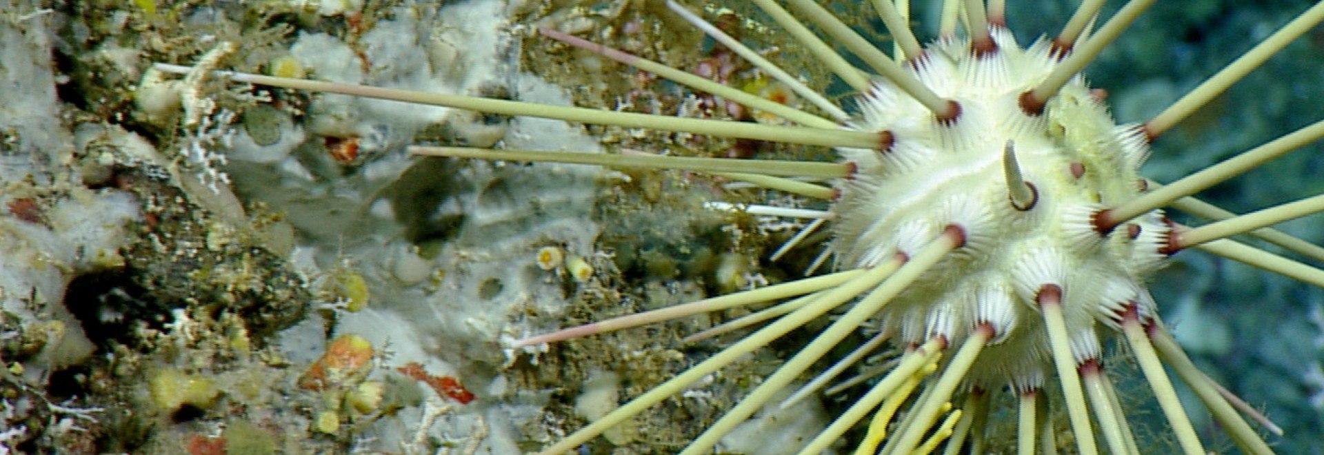 Oceani: predatori degli abissi