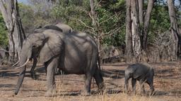 Incontri di elefanti