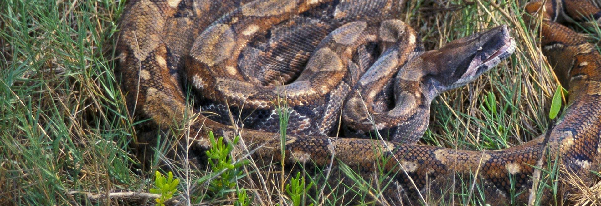 Super serpenti