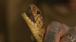 Un serpente sul tetto