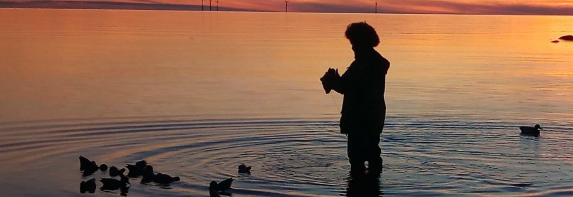 Andrea Bartoletti - Beccacce sull'Isola di Gotland