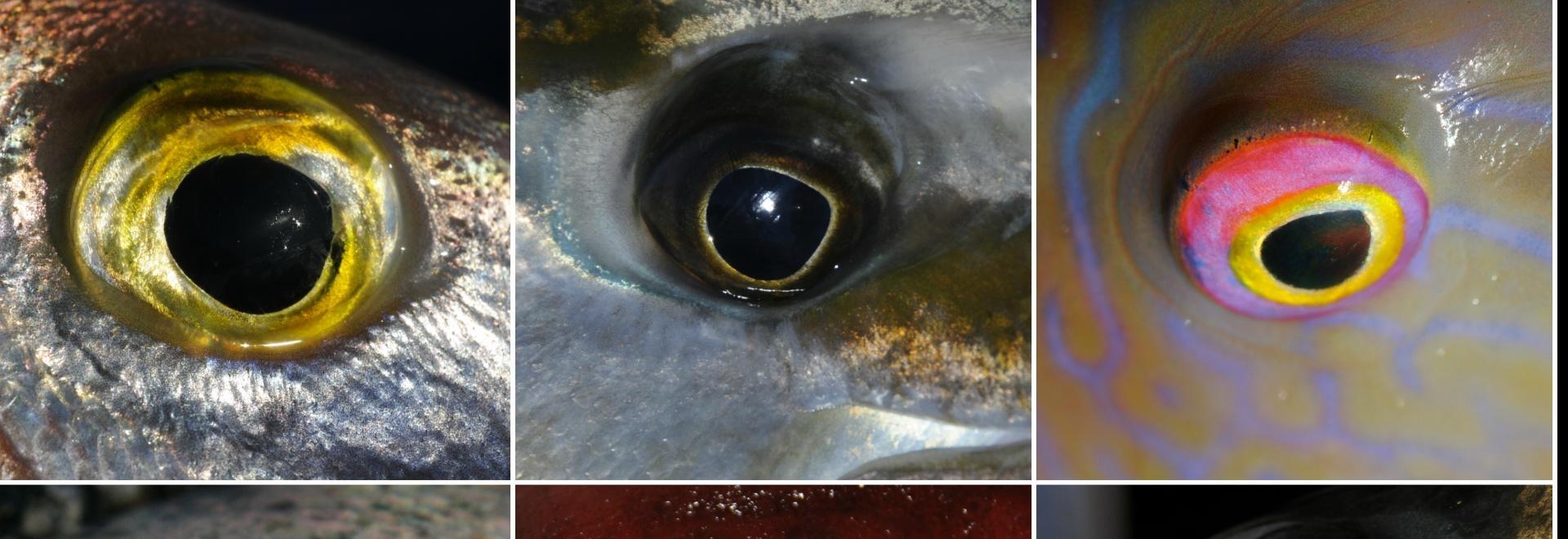 Memoria e apprendimento nei pesci