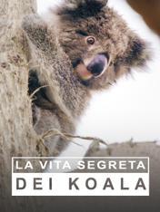 S1 Ep1 - La vita segreta dei koala