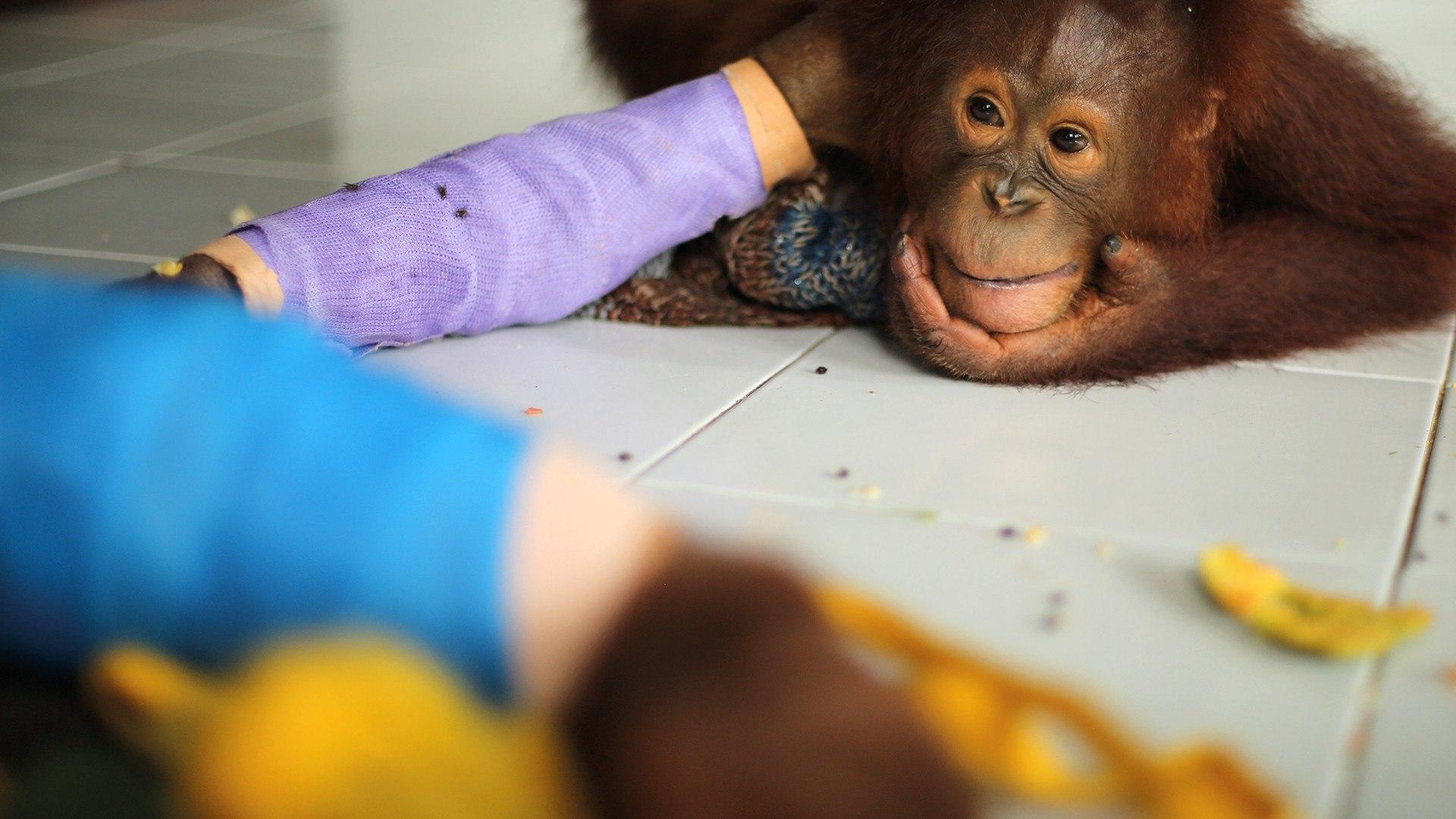 Sky Nature HD La scuola di sopravvivenza degli oranghi
