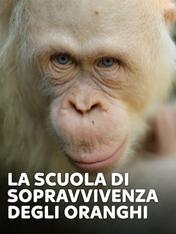 S2 Ep9 - La scuola di sopravvivenza degli oranghi
