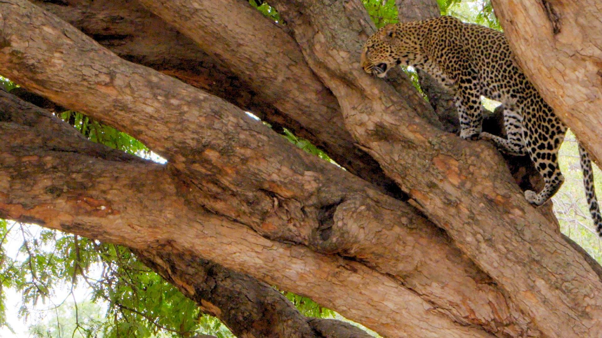 Sky Nature HD Africa estrema