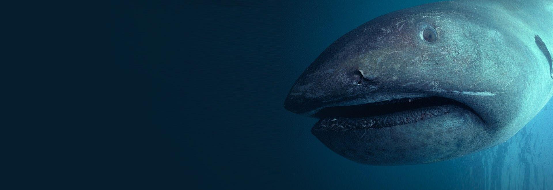 Gli squali più strani del mondo