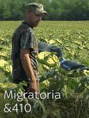 Migratoria & 410