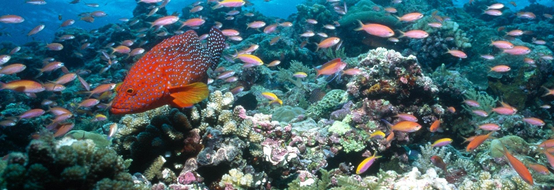 Palau: meraviglia del Pacifico