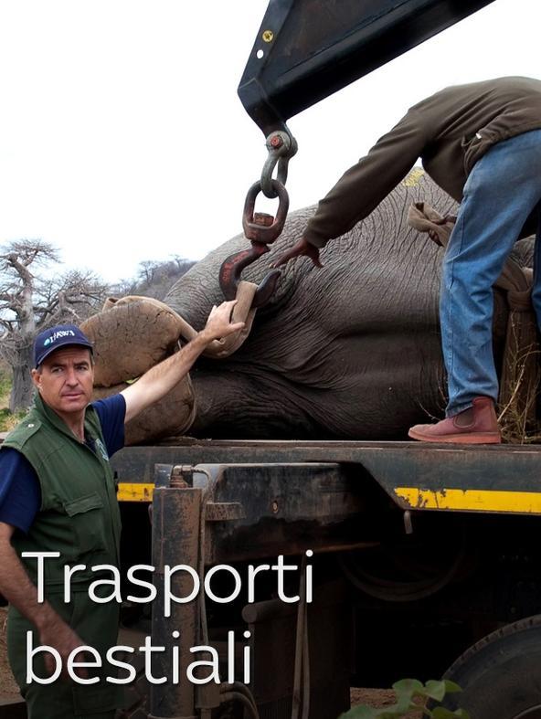 Trasporti bestiali